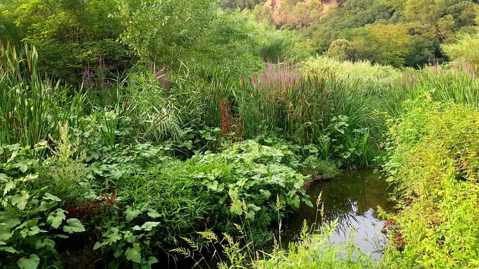 Coneix el nostre riu: el Riu Ripoll!